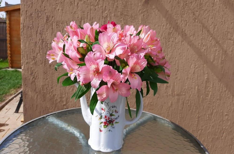 lumina din noi flori bucurii în pixeli simona rentea